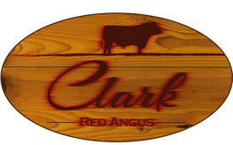 Clark Red Angus